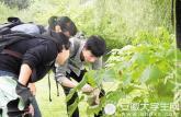 捕捉两万余只昆虫囊括16个目120个科 这份暑假作业很拉风