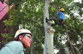 西北大学开设爬树课程:女生比男生选的多