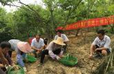 皖西学院赴金寨县开展中药种植技术培训助力革命老区绿色减贫绿色振兴