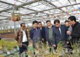 打造百亿产值建设西山药库中国工程院院士到六安考察指导霍山石斛产业开发