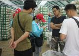 精准扶贫:蚌埠学院学子走进乡村,助力当地特色产业