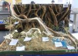 宿州学院学子在安徽省大学生生物标本制作大赛中再获佳绩