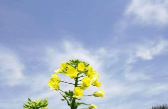 春天到了,江南的油菜花开了!一起云赏花吧!