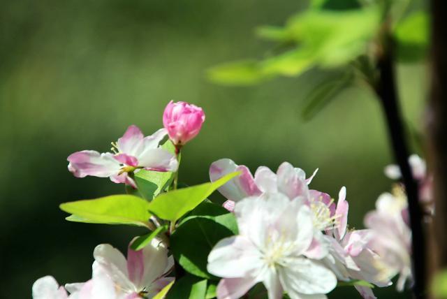 蜜蜂、蝴蝶、喜鹊、画眉、小燕子,忙碌于校园各个角落,采集着春天的气息,活跃着思想的萌动。