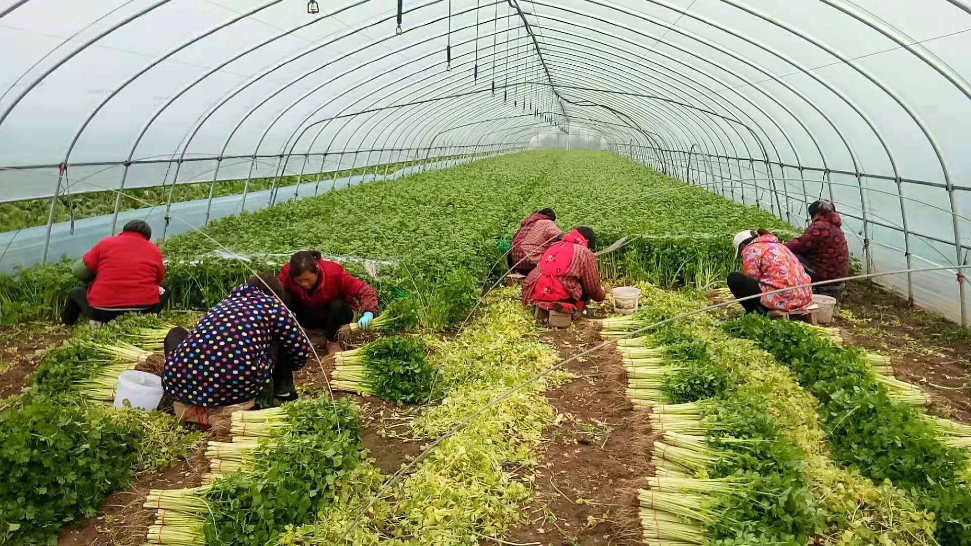 探访蚌埠五彩产业之绿:安徽财经大学学子走进怀远县耕龙种植专业合作社