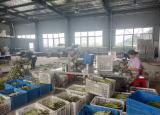 蚌埠学院学子三下乡走进龙亢农场:助力乡村振兴,感受现代农业发展