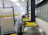 滁州学院学子实践活动:兴菊花产业 助乡村振兴
