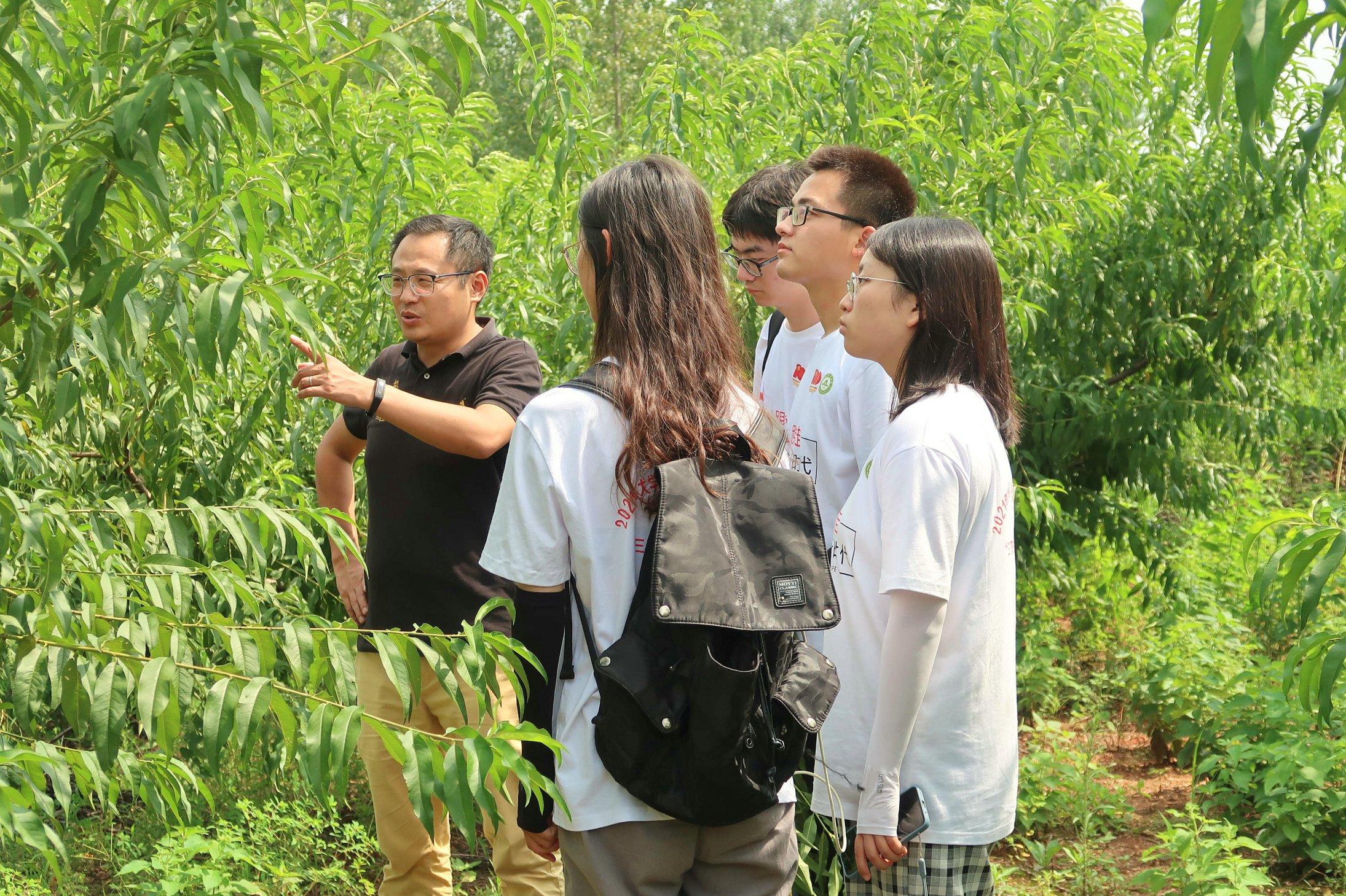 安農學子三下鄉:探尋果樹廢枝問題,助力節能減排